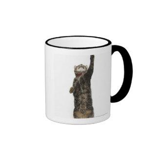 Domestic tabby cat standing on two legs reaching coffee mugs