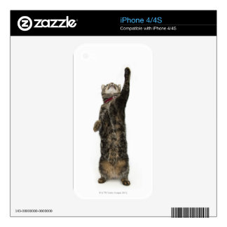 Domestic tabby cat standing on two legs reaching skins for iPhone 4