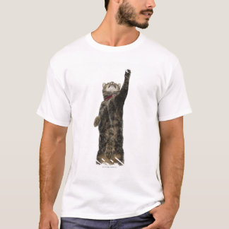 Domestic tabby cat standing on two legs reaching T-Shirt