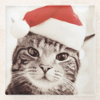 Domestic tabby cat wearing red Christmas hat Glass Coaster
