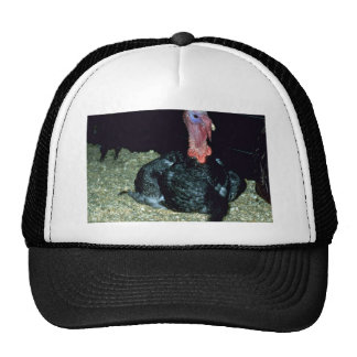 Domestic Turkey Trucker Hats
