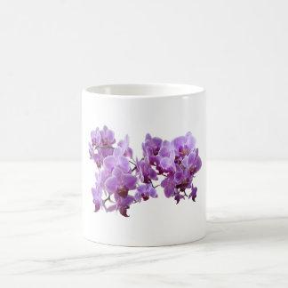 domestica del orchidea taza básica blanca