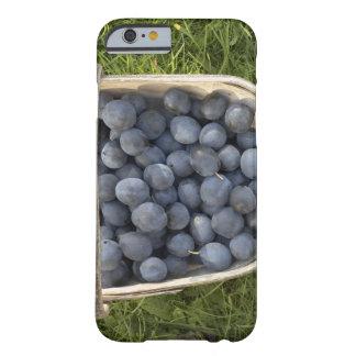 Domestica del Prunus, ciruelas damascenas Funda Barely There iPhone 6