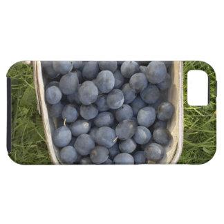 Domestica del Prunus, ciruelas damascenas Funda Para iPhone SE/5/5s