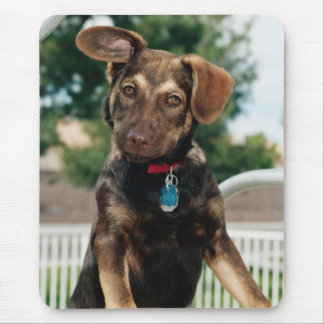 Domesticated Animals 228 Mouse Pad