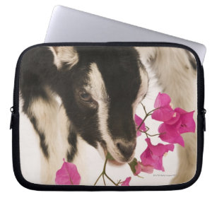 British Alpine Goats Gifts on Zazzle