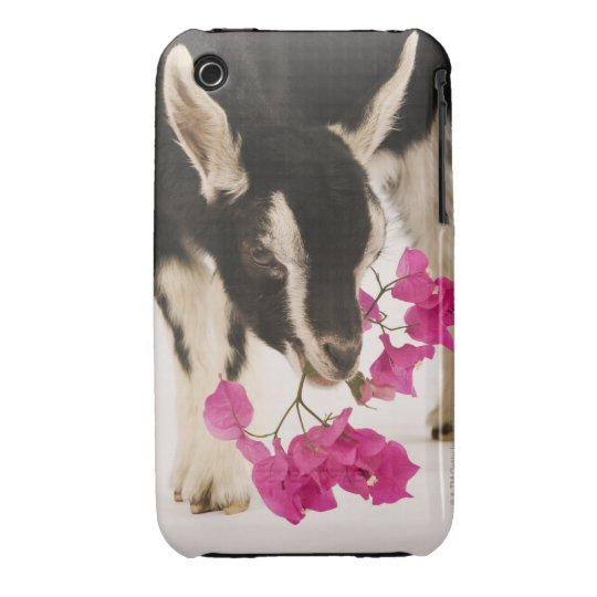 Domesticated British Alpine goat (kid). Black iPhone 3 Cover