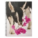 Domesticated British Alpine goat (kid). Black Spiral Notebook
