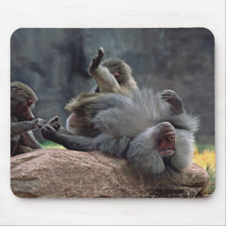 Dominant male Hamadryas baboon being groomed, Mouse Pad
