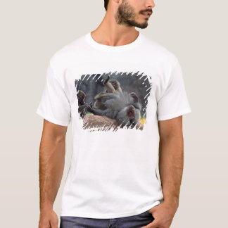 Dominant male Hamadryas baboon being groomed, T-Shirt