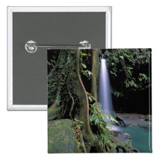 Dominica, Emerald Pool, Waterfall. Pins