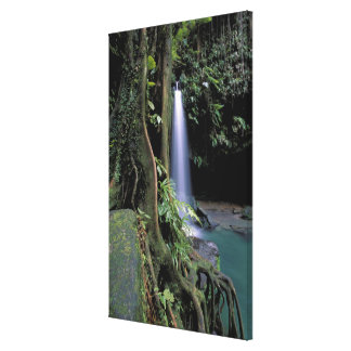 Dominica, Emerald Pool, Waterfall. Canvas Print
