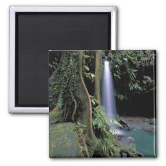 Dominica, Emerald Pool, Waterfall. 2 Inch Square Magnet
