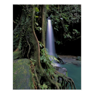Dominica, Emerald Pool, Waterfall. Poster