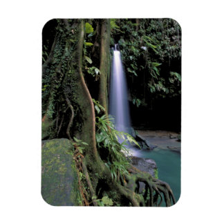 Dominica, Emerald Pool, Waterfall. Rectangular Photo Magnet