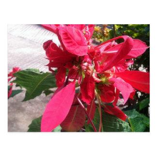 Dominica Flower Postcard