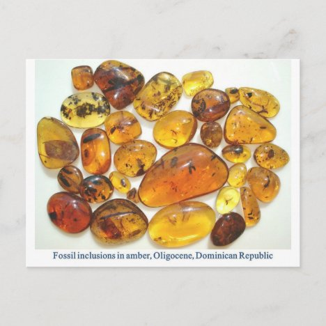 Dominican amber with various insect inclusions postcard