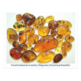 Dominican amber with various insect inclusions post cards