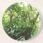 Dominican Rain Forest Coaster
