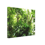 Dominican Rain Forest I Tropical Green Nature Canvas Print