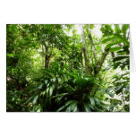 Dominican Rain Forest I Tropical Green Nature Card