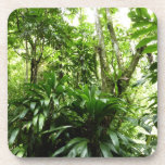 Dominican Rain Forest I Tropical Green Nature Drink Coaster