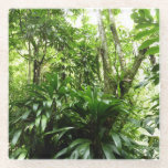 Dominican Rain Forest I Tropical Green Nature Glass Coaster