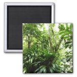 Dominican Rain Forest I Tropical Green Nature Magnet