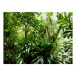 Dominican Rain Forest I Tropical Green Nature Perfect Poster