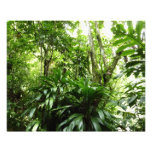 Dominican Rain Forest I Tropical Green Nature Photo Print