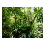 Dominican Rain Forest I Tropical Green Nature Poster