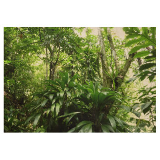 Dominican Rain Forest I Tropical Green Nature Wood Poster