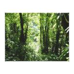 Dominican Rain Forest II Tropical Green Canvas Print