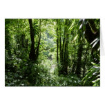 Dominican Rain Forest II Tropical Green Card