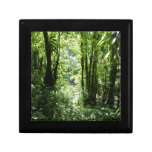 Dominican Rain Forest II Tropical Green Gift Box