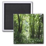 Dominican Rain Forest II Tropical Green Magnet