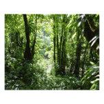 Dominican Rain Forest II Tropical Green Photo Print