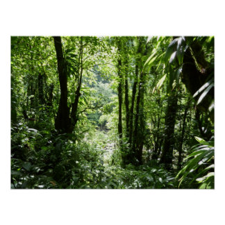 Dominican Rain Forest II Tropical Green Poster
