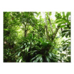 Dominican Rain Forest Photo Print