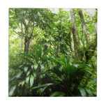 Dominican Rain Forest Tile