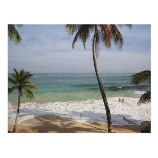 Dominican Republic, North Coast, Abreu, Playa 4 Postcard