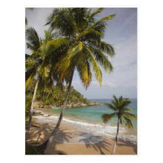 Dominican Republic, North Coast, Abreu, Playa Postcard