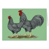 Dominique Chickens