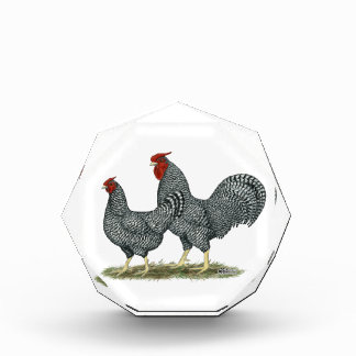 Dominique Chickens Award