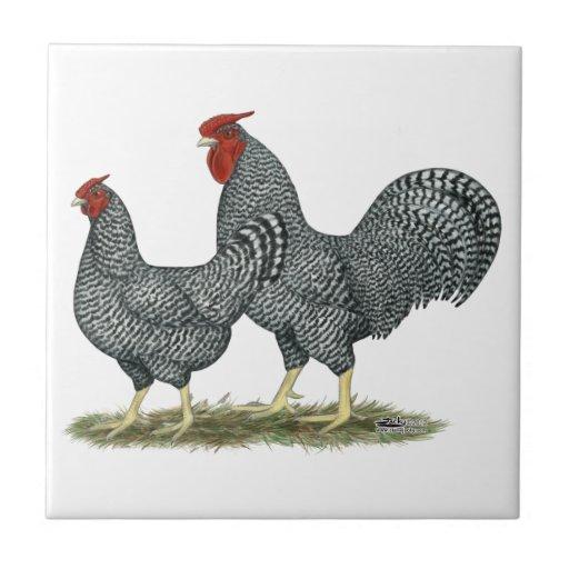 Dominique Chickens Small Square Tile