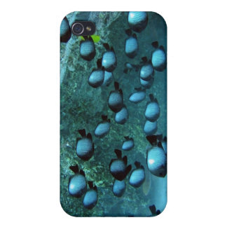 Domino Damsel Fishes iPhone 4 Cases