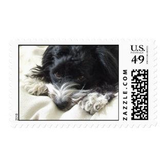 Domino (Havanese Dog) Postage Stamp