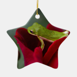 Don Juan Red Rose and Green Tree Frog Ceramic Ornament