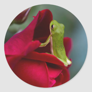 Don Juan Red Rose and Green Tree Frog Classic Round Sticker