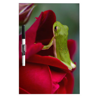 Don Juan Red Rose and Green Tree Frog Dry-Erase Board